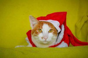 ANIFIT Weihnachts-Futteraktion