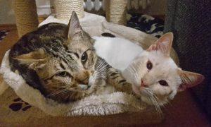 Katzen liegen gemeinsam im Korb